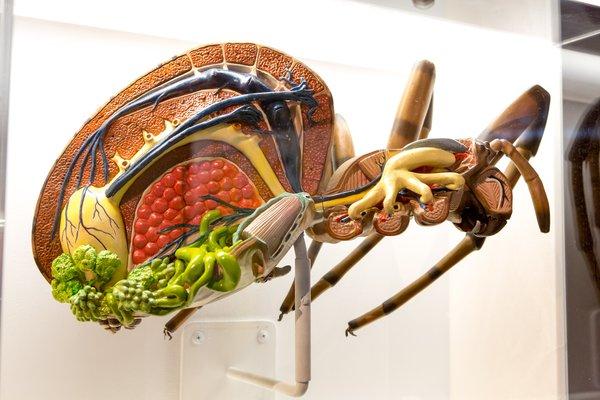 Spiders exhibition at Questacon (4)