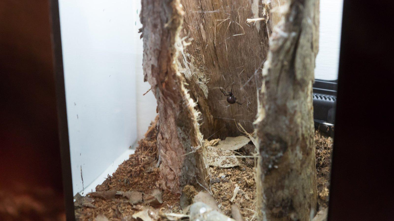 Spiders exhibition at Questacon (6)