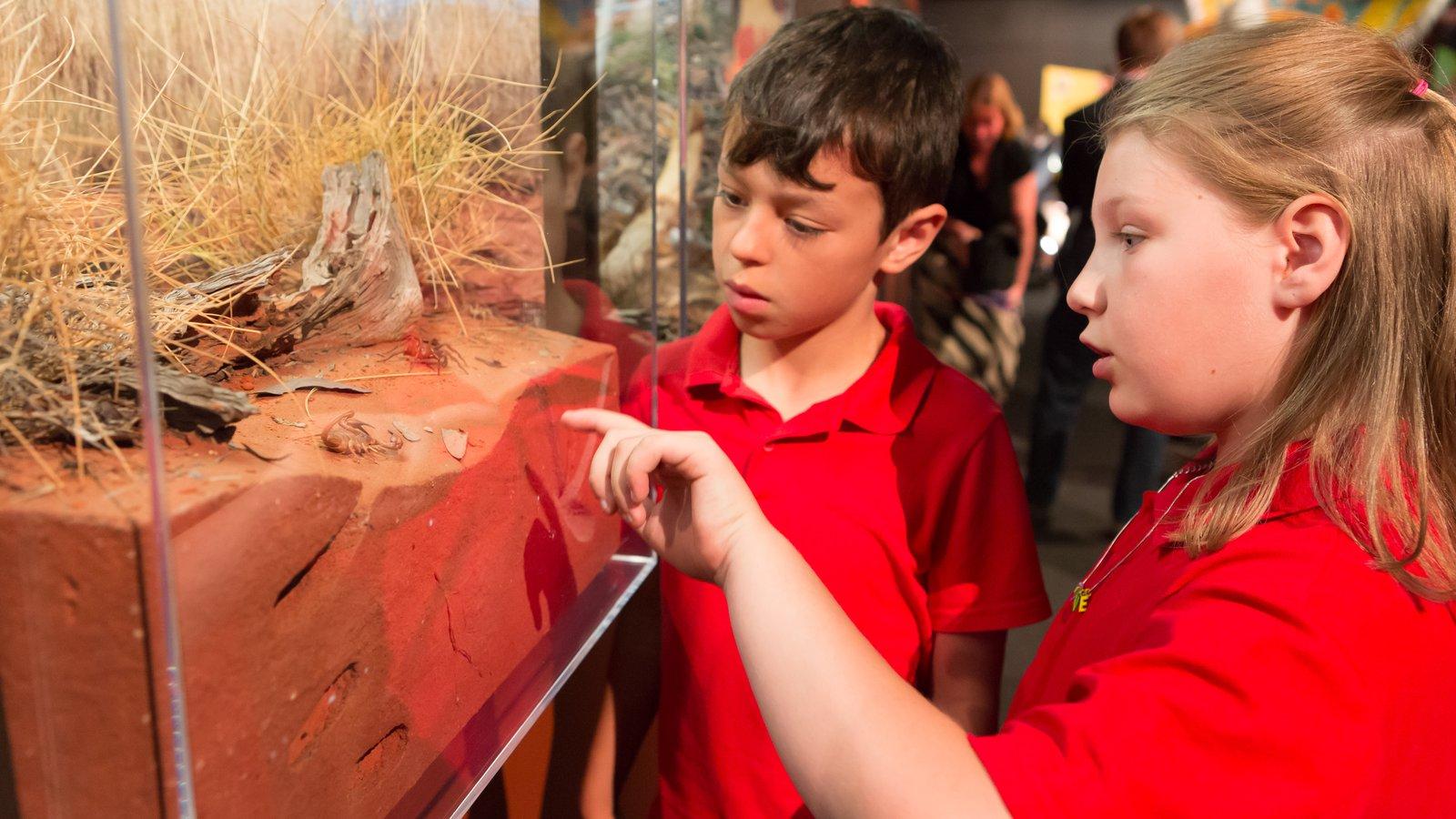 Spiders exhibition at Questacon (11)