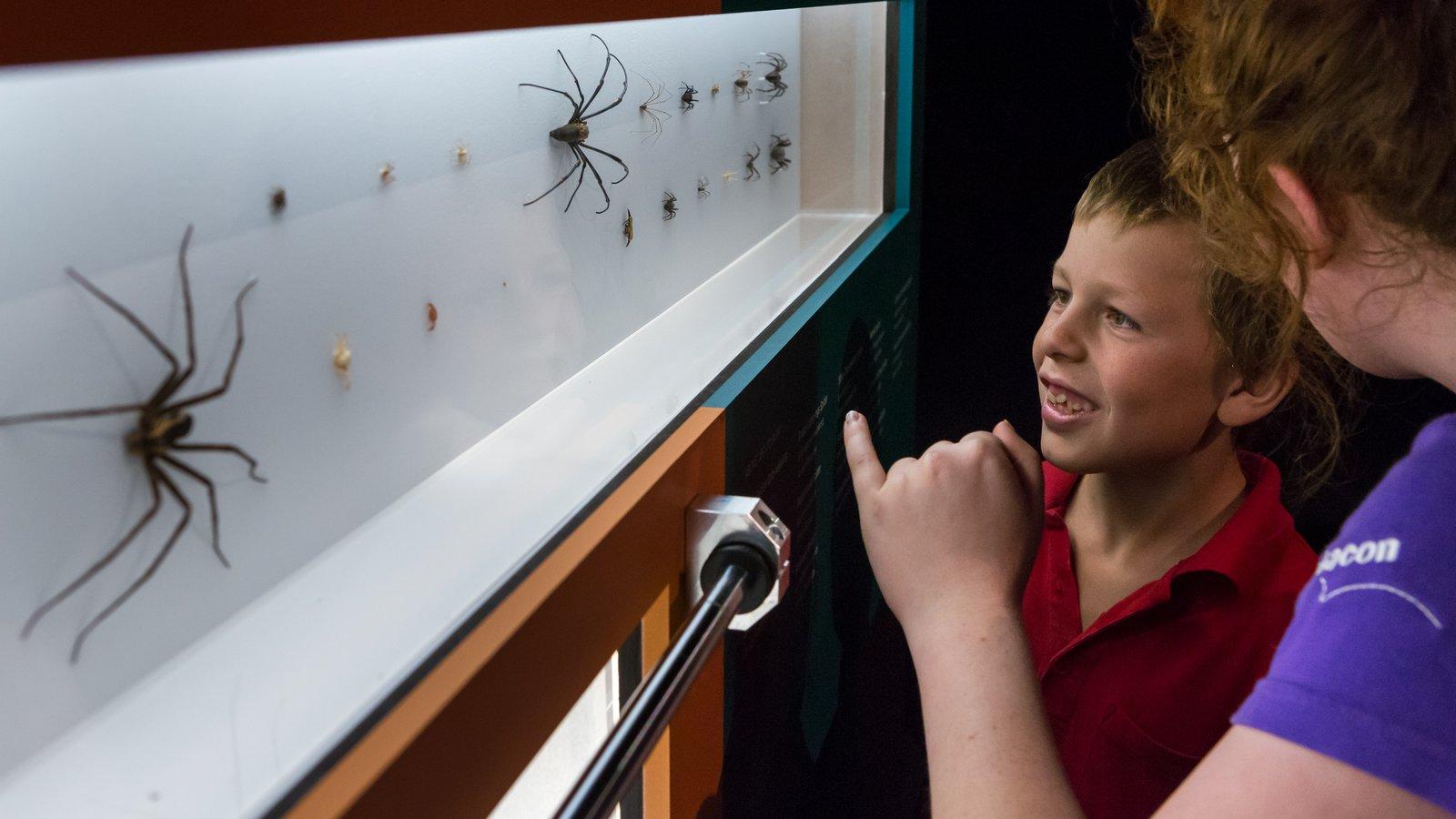 Spiders exhibition at Questacon (13)