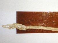 Shark skeleton