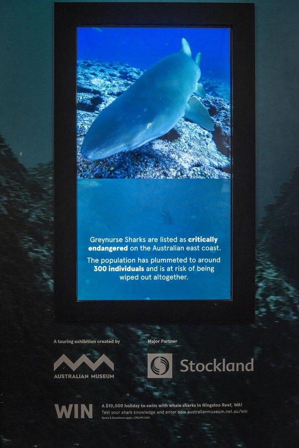 Sharks - Stockalnd Touring Exhibit Prep 13 Feb 2020