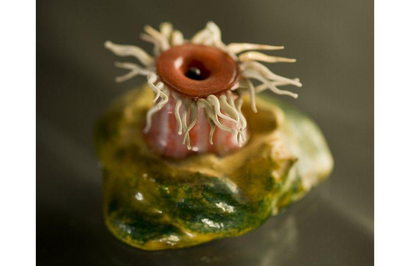 Blaschka glass models of British marine invertebrates