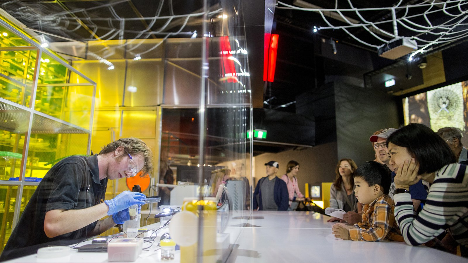 Spiders Exhibition - Venom Lab