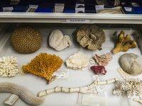 Marine Invertebrates Collection Area 2018