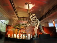 Dinosaur gallery