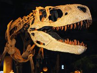 Appalachiosaurus montgomeriensis