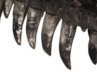 Dinosaur teeth