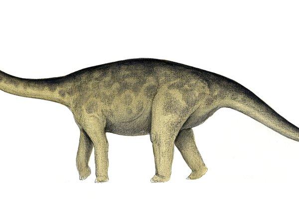 Rhoetosaurus