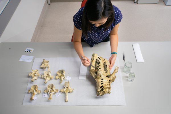 Jackie Nguyen and a Moa Skeleton