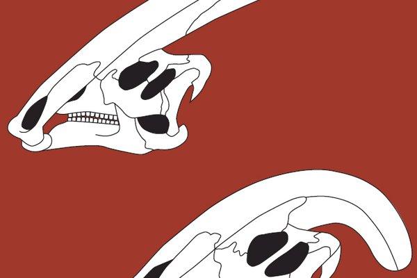 parasaurolophus skulls
