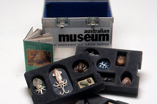 Museum in a Box - Squids and Snails