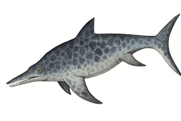 Platypterygius longmani