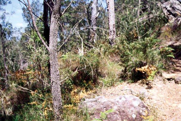 Sydney Sandstone Habitat