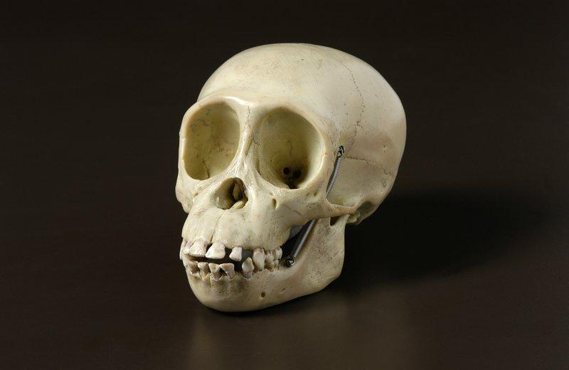 Humanoid Skulls