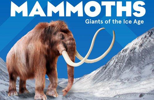 Mammoths Hero