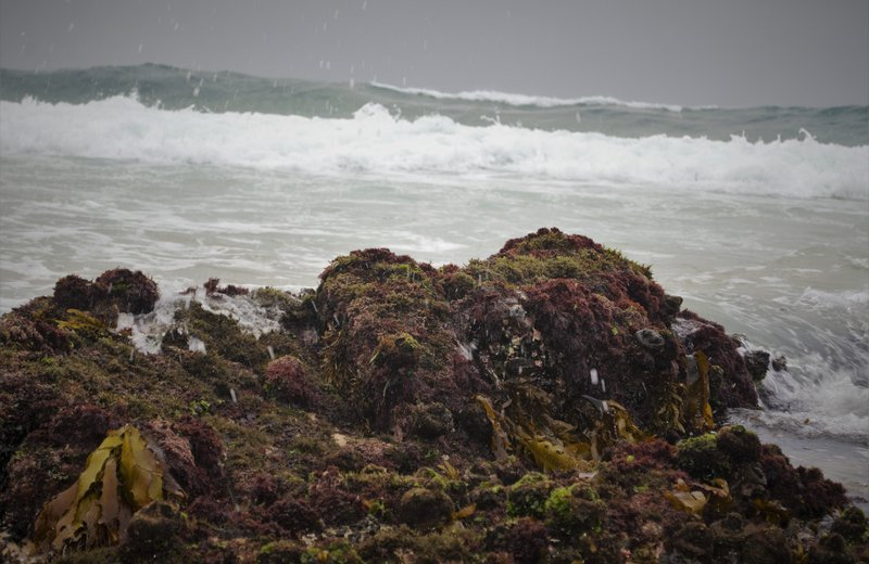 Intertidal habitat