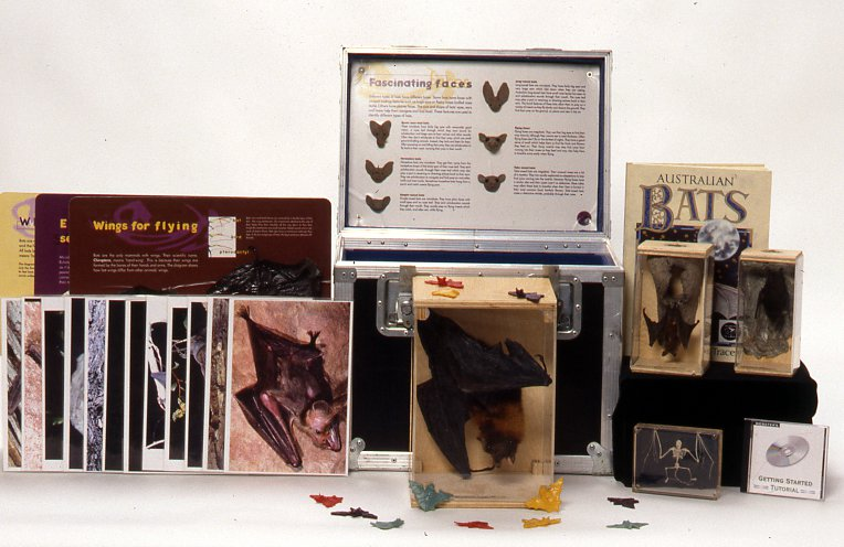 Museum in a Box bats
