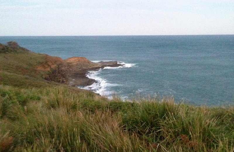 Coastal heath habitat