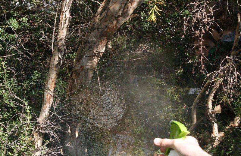 spraying web