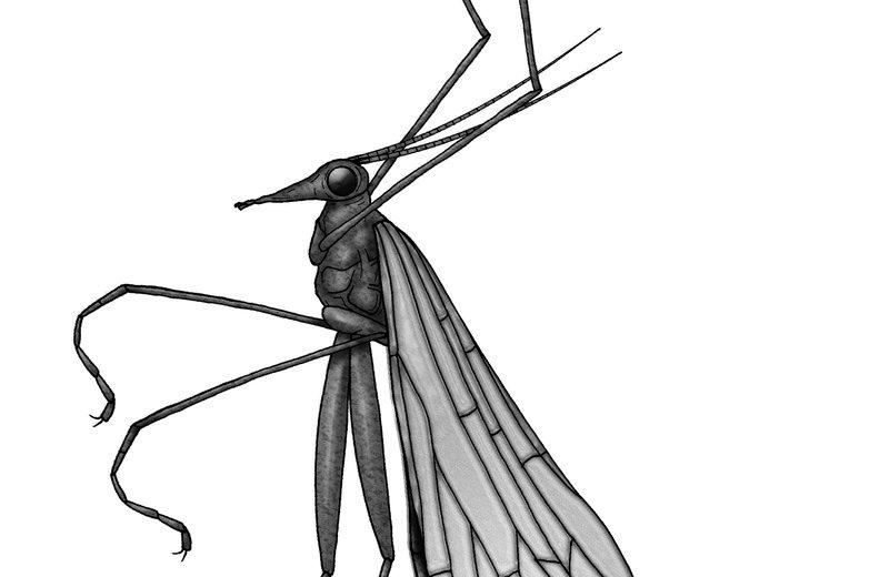 Mecoptera
