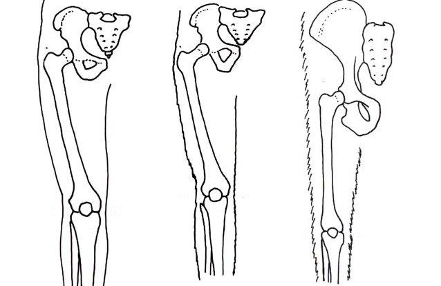 Human evolution drawings