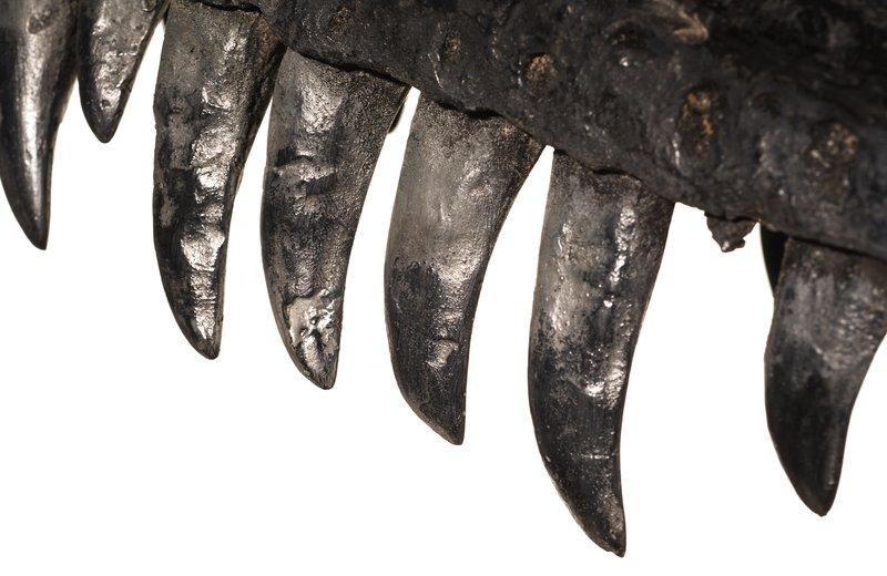 Dinosaur teeth