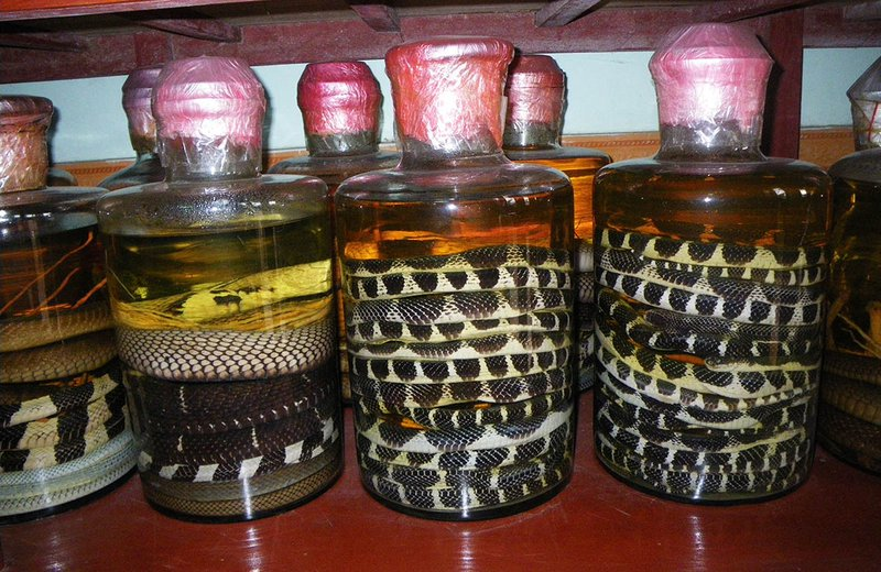 Snakes as traditional medicine