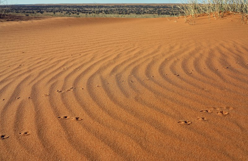 Simpson Desert Expedition 2015