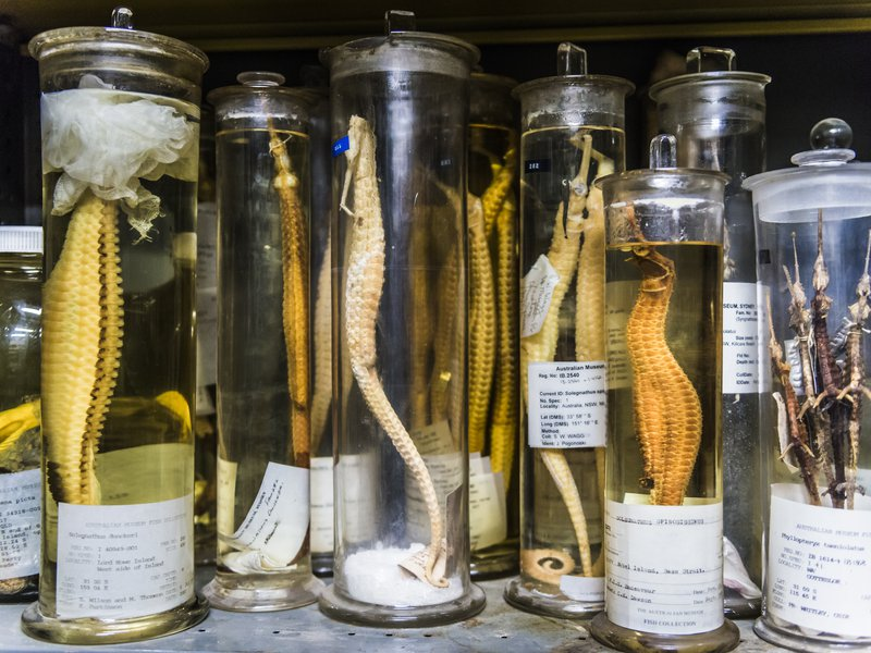 Ichthyology Collection Area 2018