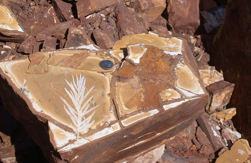 Fish and plant fossil