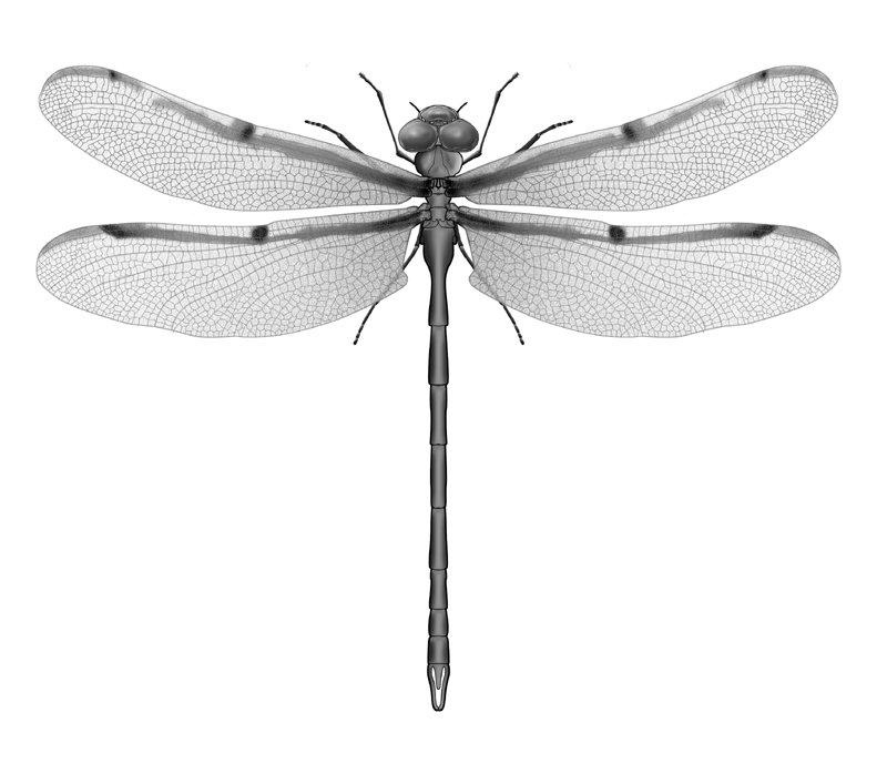 What Do Dragonflies And Damselflies Look Like?
