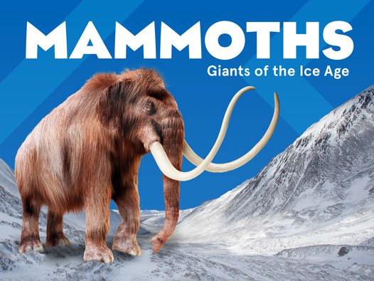 Mammoths - Giants of the Ice age - The Australian Museum