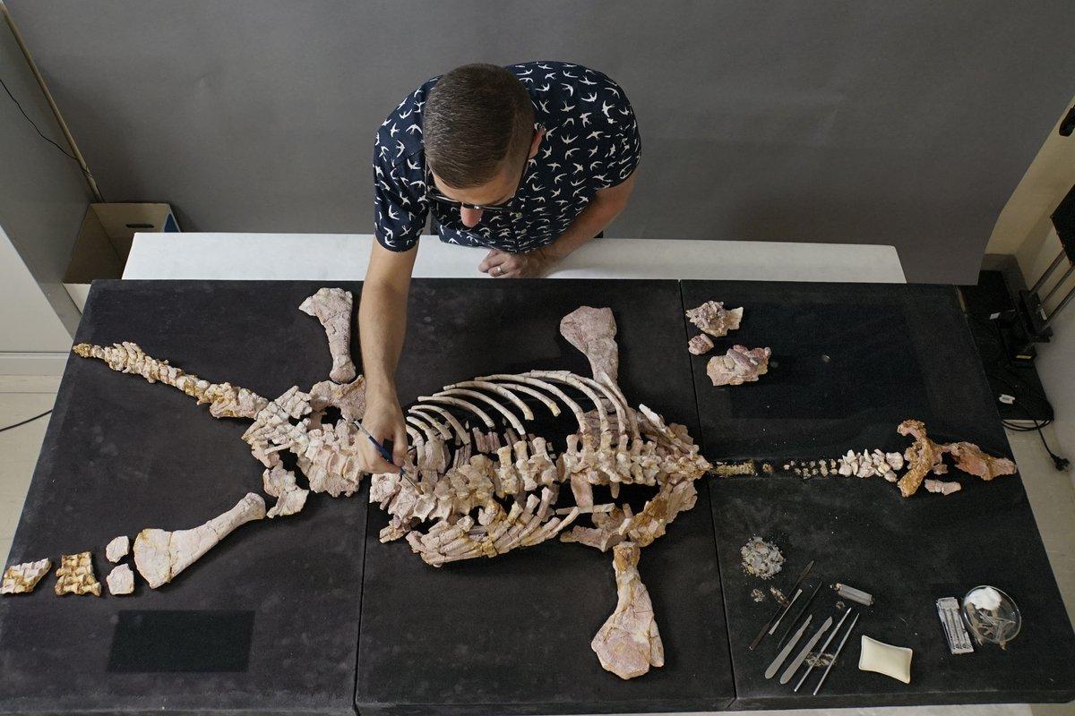 Preparing fossils, reconstructing the past - The Australian