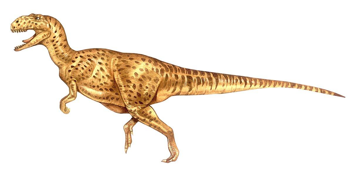Yangchuanosaurus Shangyouensis The Australian Museum