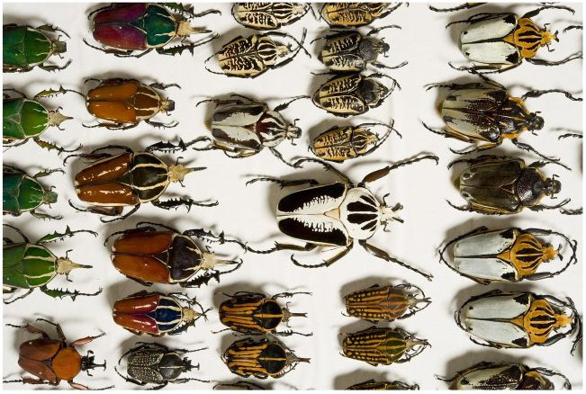 Common and Unusual Identifications - Beetles - The