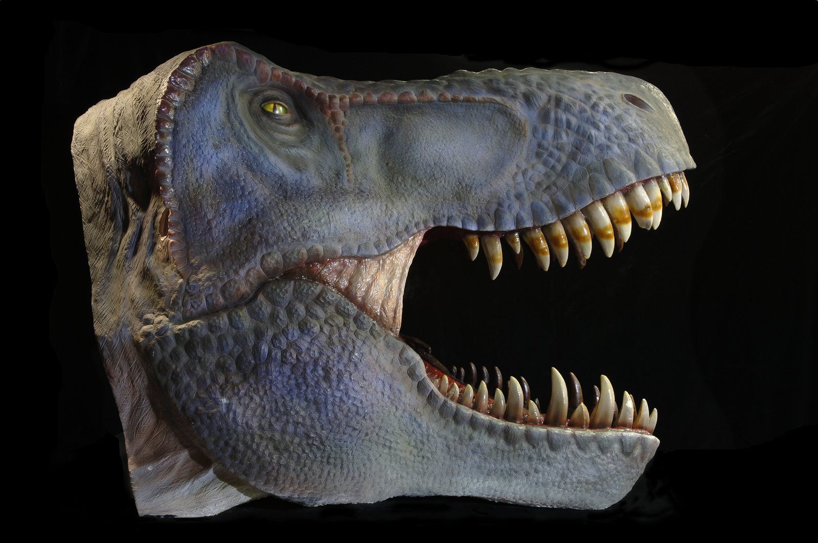 Tyrannosaurus rex reconstructed head