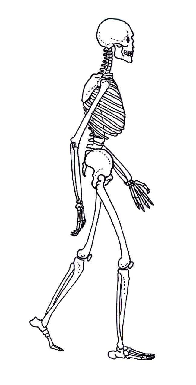 human evolution website drawings