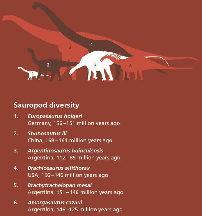 Sauropod diversity