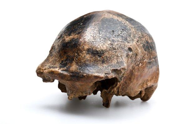 'Solo man' skull