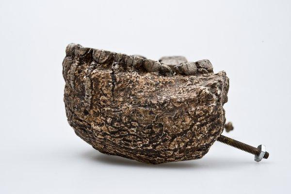Paranthropus boisei, lower jaw bone