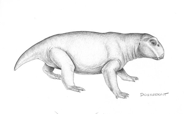 Illustration of dicynodont