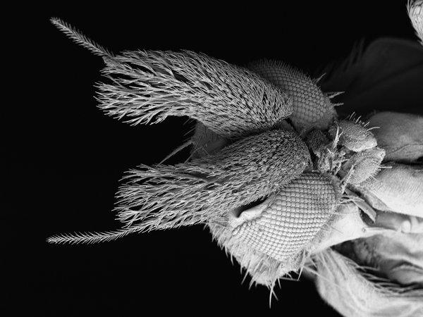 Scuttle Fly SEM
