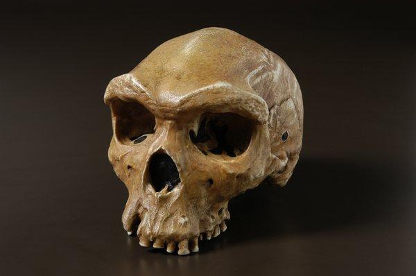 'Kabwe' or 'Broken Hill 1' Homo heidelbergensis skull