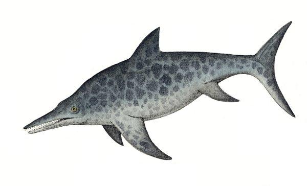 Illustration of ichthyosaur