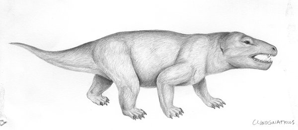 illustration of Cynognathus crateronotus