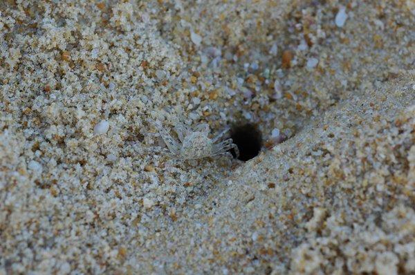 Camo Crab - Ciaran Nagle