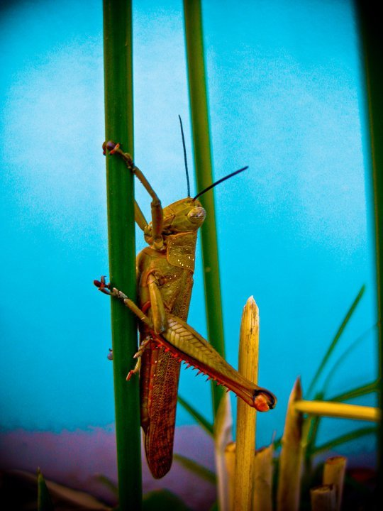 Grasshopper - Tahlia McLean