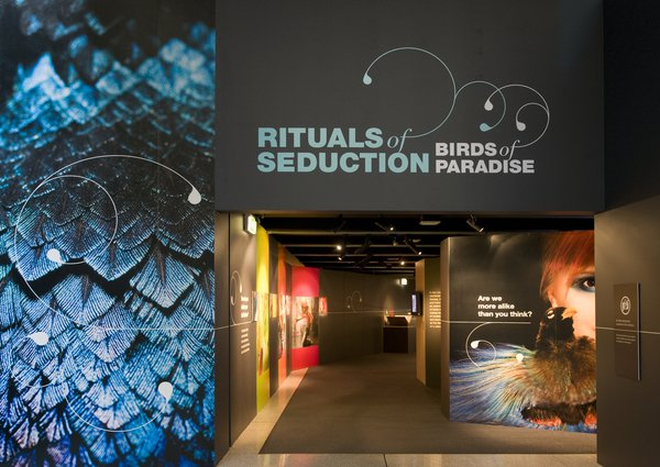 Rituals of Seduction: Birds of Paradise