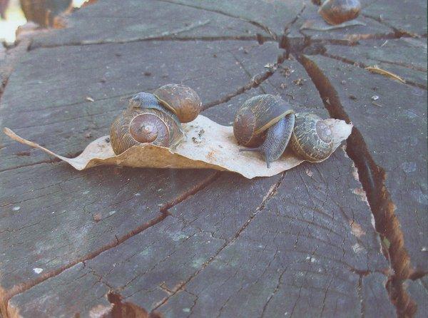 Five Snails